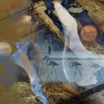Sallie Sells Sea Shells | flamingos, river, moon and shells montage