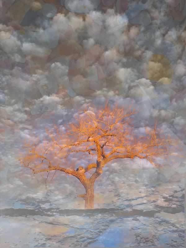 Tree Illumined | winter tree and sea montage